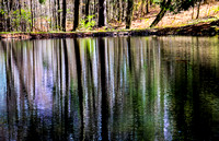 SHIMMERING REFLECTIONS ON SPRING POND