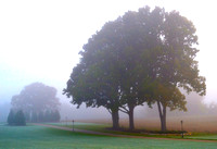 AUTUMN TREES WRAPPED IN FOGGY MIST