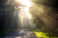 Spray of Sunbeams on Country Road